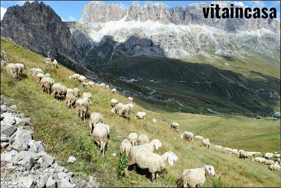 pecore-al-pascolo-res