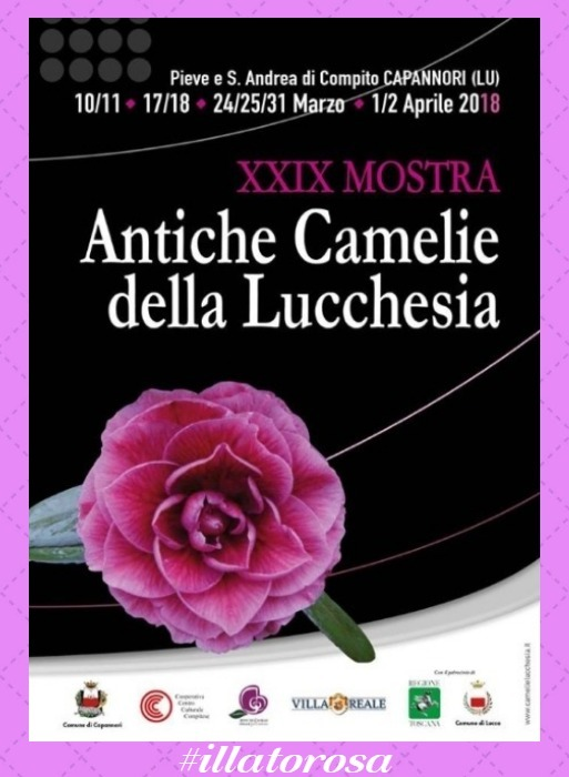 mostra camelie by vitaincasa