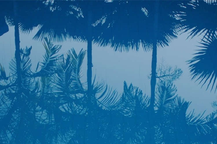 08. Palms and pool by vitaincasa (1)