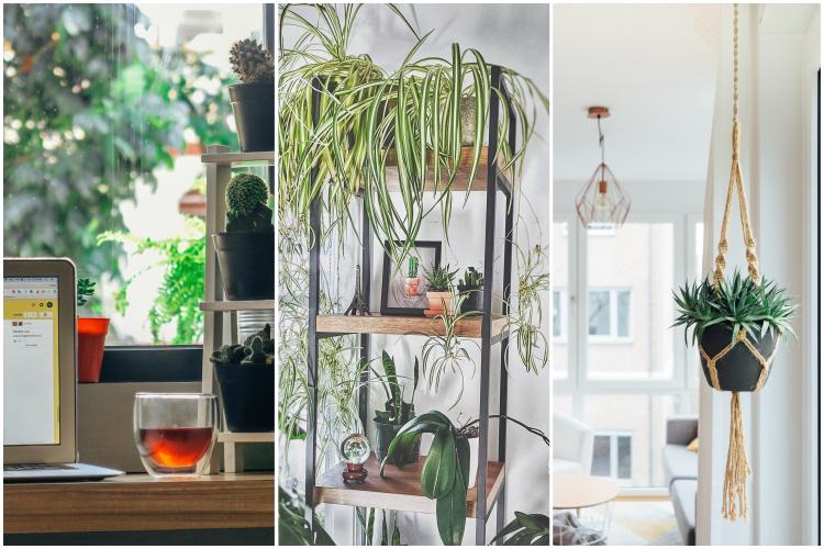 Tendenza piante da interni by vitaincasa