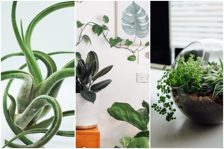 Tendenze piante da interni by vitaincasa